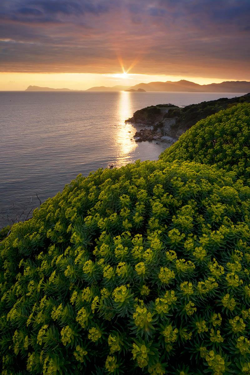 Sardinian Wildflowers by Alessandro Carboni