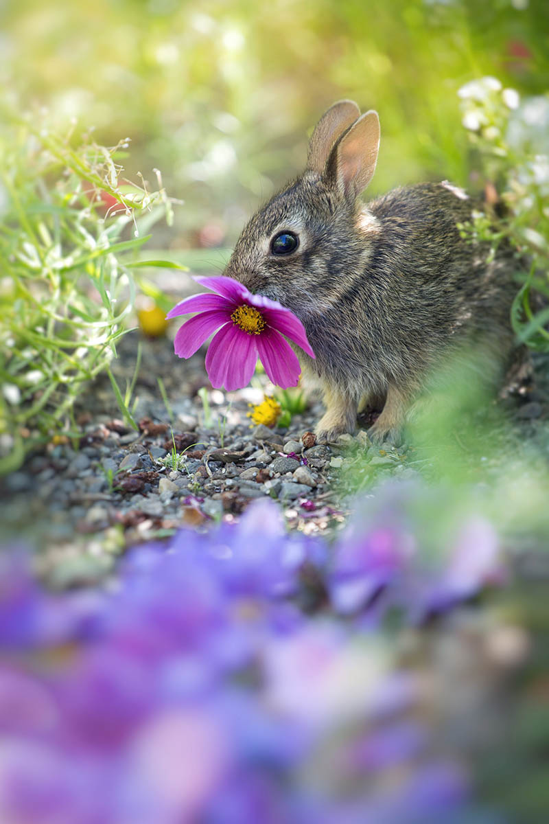 The Flower Thief by Lynne McClure