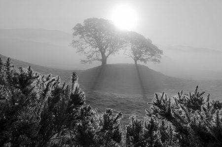 Twin Oak Dawn by Allan Wright