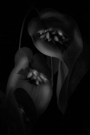 Exotic Beauty by Lilianna Sokolowska
