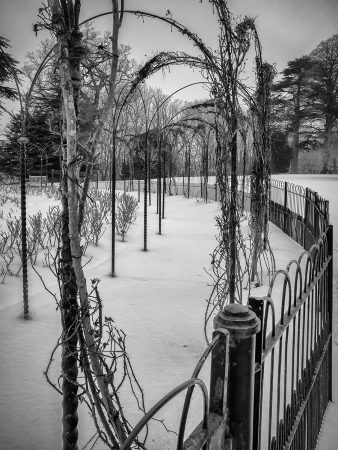 Rose Garden Engulfed in Snow by Brian Lee