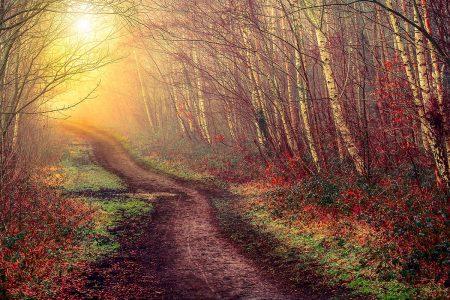 Autumn Path by Kyle Parr