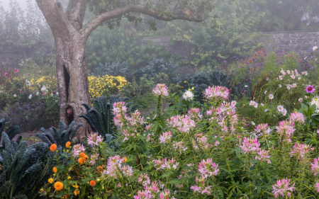 Mist over the Lower Walled Garden by Nigel McCall