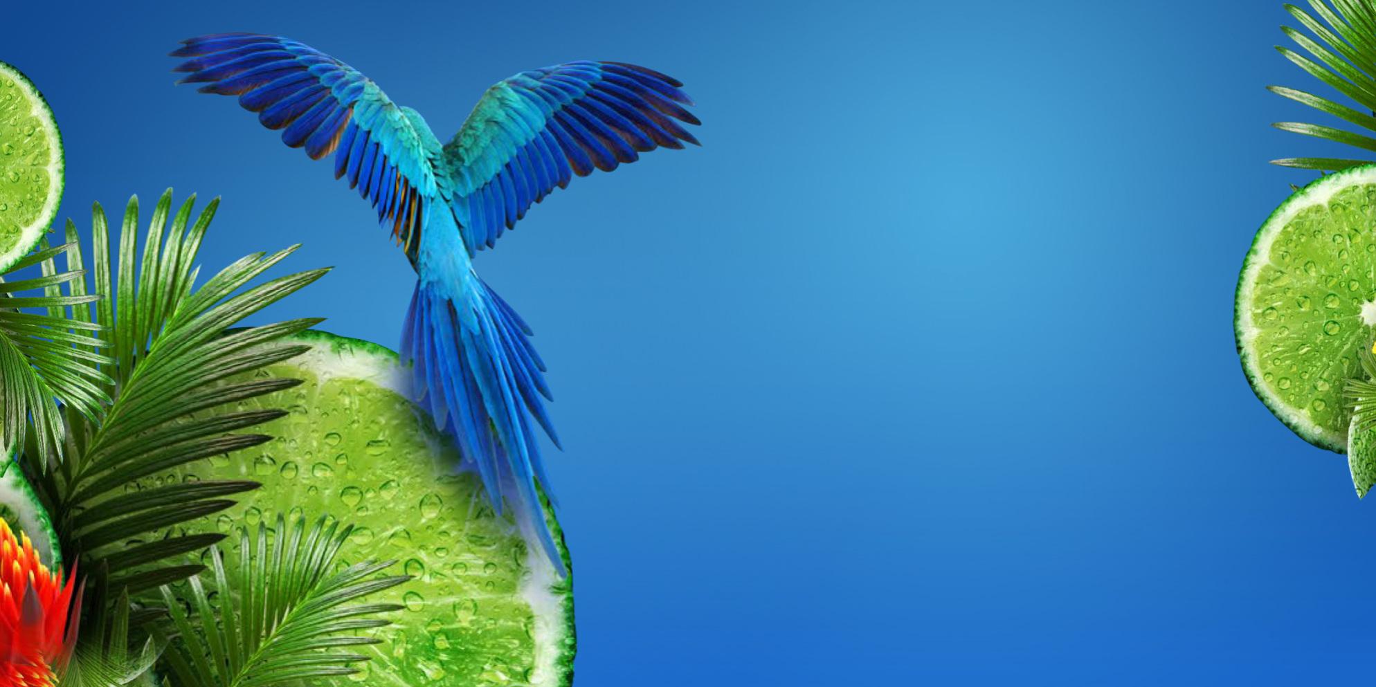 Brasil Lime
