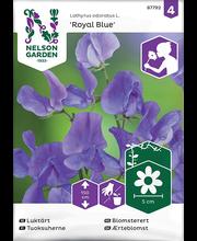 87792 Lillhernes Royal Blue