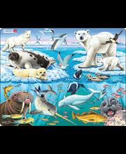 Puzzle Arktika FH11