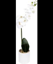 Kunsttaim orhidee 78 cm, valge