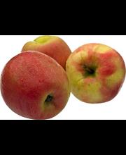 Õun Honey Crunch, I klass