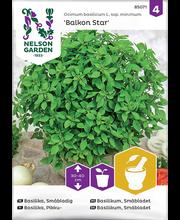 85071 Basiilik Balkon Star, väikeseleheline