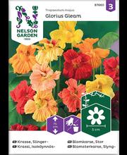 87660 Ronikress Glorius Gleam