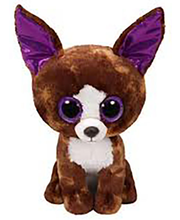 Chihuahua Dexter