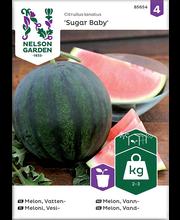 85654 Arbuus Sugar Baby