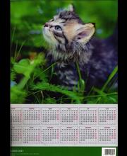 Kalender 3D Kass (A3)