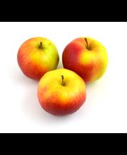 Õun Ligol, I klass