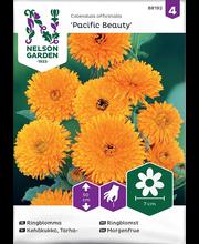 88192 Saialill Pacific Beauty