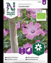 87834 Aed-rõngaslill Loveliness  Organic