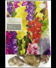 Gladiool,Mix , 10 sib., suurus 12-14
