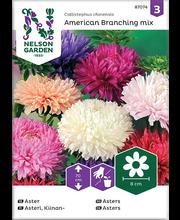 87074 Aster American Branching mix