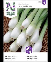 85588 Roheline sibul White Lisbon