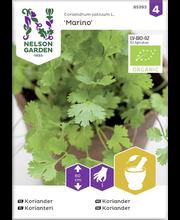 85393 Koriander Cadiz Organic