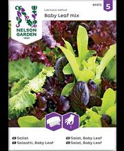 85972 Salat Baby Leaf mix, külvilint