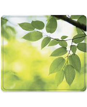 Hiirematt Leaves