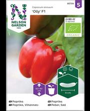 85739 Paprika Olly F1 Organic