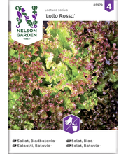 85979 Salat Bataavia Lollo Rossa