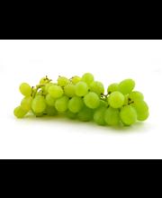 Viinamari Vittoria, I klass