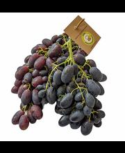 Viinamari tume Moldova I klass