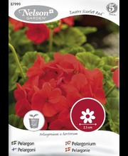 87999 Pelargoon Lustre Scarlet Red