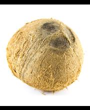 Kookospähkel 1 tk