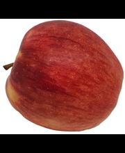 Õun Jonagold, I klass