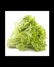 Salat Frisee pakis