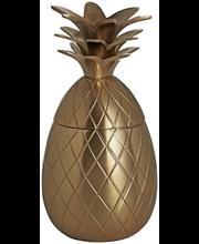 Karp Ananass 10 x 10 x 20 cm