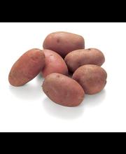 Punane kartul