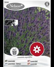 87682 Lavendel