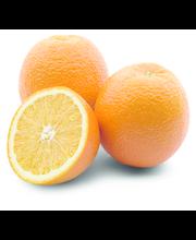 Apelsin Navel, I klass