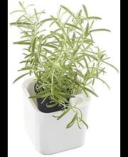 Lillepott Eden 12 cm ürtidele, valge plast