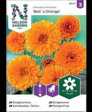 88157 Saialill Ball´s Orange  Organic