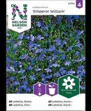 87759 Lobeelia Emperor William