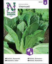 86047 Rooma salat Chartwell