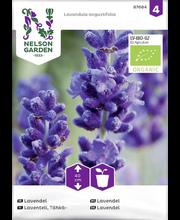 87684 Lavendel  Organic