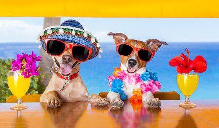 Ha nem oldható meg a nyaralás hitel nélkül