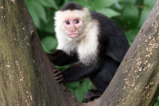 Majmok módjára viselkedünk a pénzügyekben is