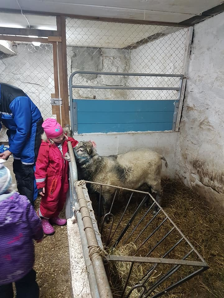 Dyrene var bemerkelsesverdig rolige selv om det ble mange barn på en gang.
