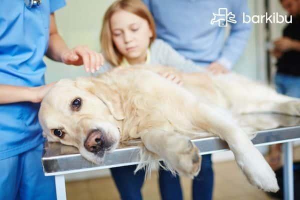 No Puedo Superar La Muerte De Mi Perro Cómo Lo Hago