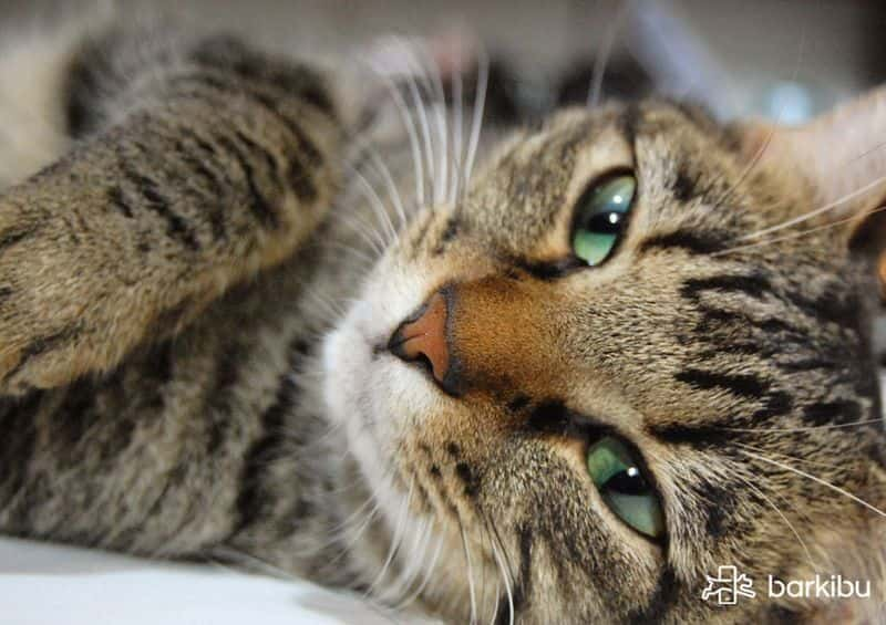 Symptoms of a dying cat of old age, of kidney failure or