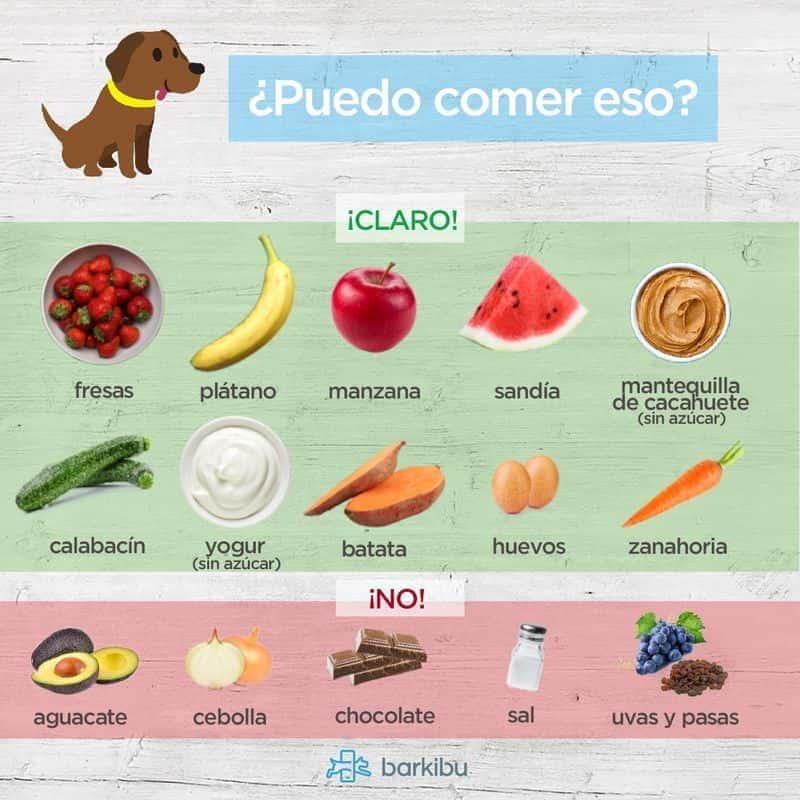 Alimentos t xicos para perros barkibu es - Cuando se puede banar a un perro ...