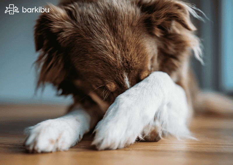 C mo saber si mi perro est triste y c mo animarlo for Como saber si un pozo esta legalizado